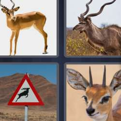 Solutions-4-images-1-mot-ANTILOPE