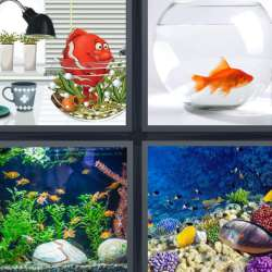 Solutions-4-images-1-mot-AQUARIUM