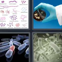 Solutions-4-images-1-mot-BACTERIE