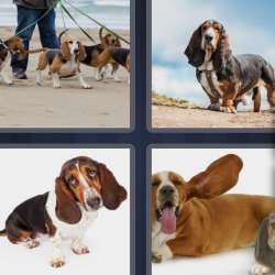 Solutions-4-images-1-mot-BASSET