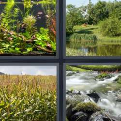 Solutions-4-images-1-mot-BIOTOPE