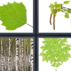 Solutions-4-images-1-mot-BOULEAU