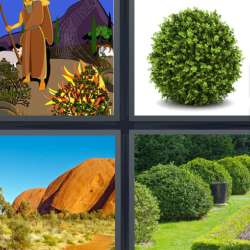 Solutions-4-images-1-mot-BUISSON