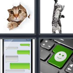 Solutions-4-images-1-mot-CHAT