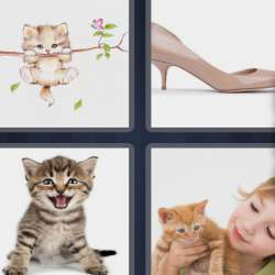 Solutions-4-images-1-mot-CHATON