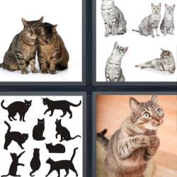 Solutions-4-images-1-mot-CHATS