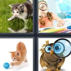 Solutions-4-images-1-mot-CURIEUX