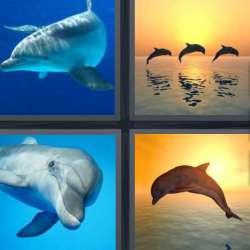 Solutions-4-images-1-mot-DAUPHIN