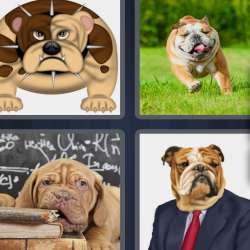 Solutions-4-images-1-mot-DOGUE
