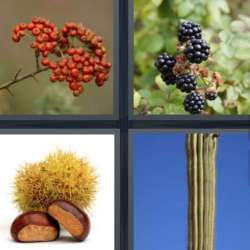 Solutions-4-images-1-mot-EPINE