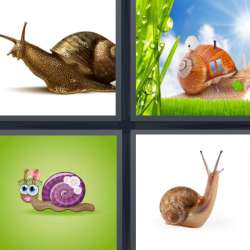 Solutions-4-images-1-mot-ESCARGOT
