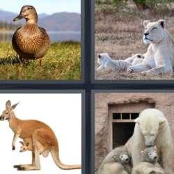Solutions-4-images-1-mot-FEMELLE