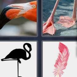 Solutions-4-images-1-mot-FLAMANT