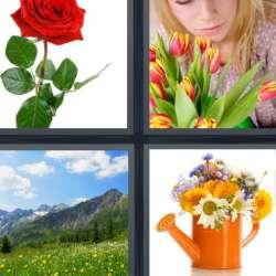 Solutions-4-images-1-mot-FLEUR