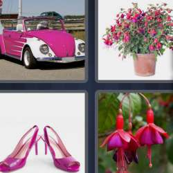 Solutions-4-images-1-mot-FUCHSIA