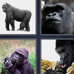 Solutions-4-images-1-mot-GORILLE