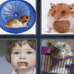 Solutions-4-images-1-mot-HAMSTER