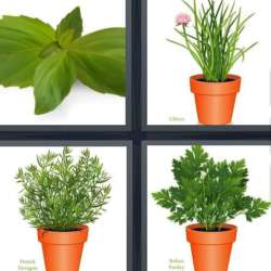 Solutions-4-images-1-mot-HERBES