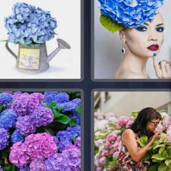 Solutions-4-images-1-mot-HORTENSIA