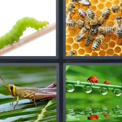 Solutions-4-images-1-mot-INSECTE