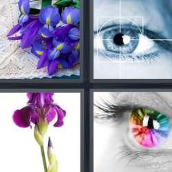 Solutions-4-images-1-mot-IRIS