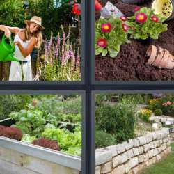 Solutions-4-images-1-mot-JARDIN