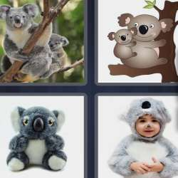 Solutions-4-images-1-mot-KOALA