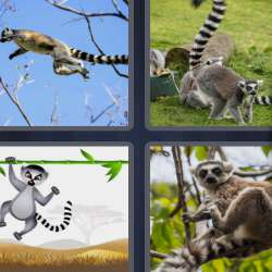 Solutions-4-images-1-mot-LEMUR