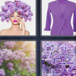 Solutions-4-images-1-mot-LILAS
