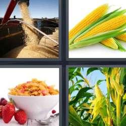 Solutions-4-images-1-mot-MAÏS