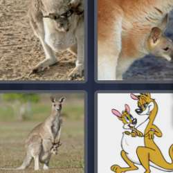 Solutions-4-images-1-mot-MARSUPIAL