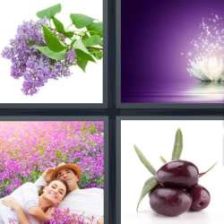 Solutions-4-images-1-mot-MAUVE