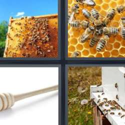 Solutions-4-images-1-mot-MIEL