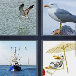 Solutions-4-images-1-mot-MOUETTE