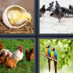 Solutions-4-images-1-mot-OISEAU