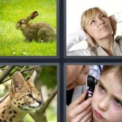 Solutions-4-images-1-mot-OREILLE