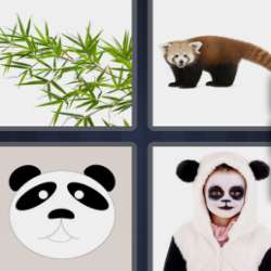Solutions-4-images-1-mot-PANDA