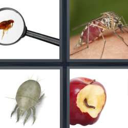 Solutions-4-images-1-mot-PARASITE
