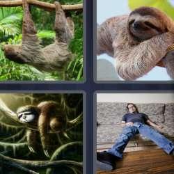 Solutions-4-images-1-mot-PARESSEUX