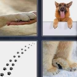 Solutions-4-images-1-mot-PATTES