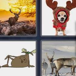 Solutions-4-images-1-mot-PAUMURE