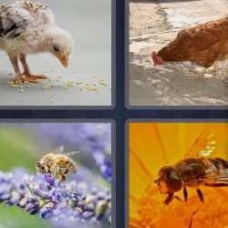Solutions-4-images-1-mot-PICOTER