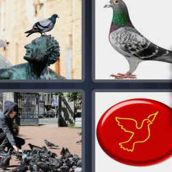 Solutions-4-images-1-mot-PIGEON