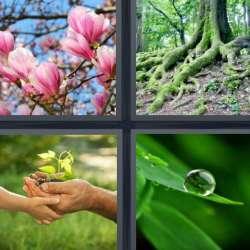 Solutions-4-images-1-mot-PLANTES