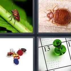 Solutions-4-images-1-mot-PUNAISE