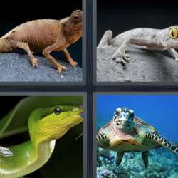Solutions-4-images-1-mot-REPTILE
