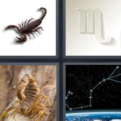 Solutions-4-images-1-mot-SCORPION