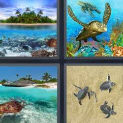 Solutions-4-images-1-mot-TORTUE