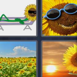 Solutions-4-images-1-mot-TOURNESOL