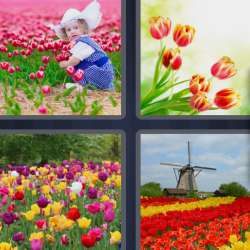 Solutions-4-images-1-mot-TULIPES